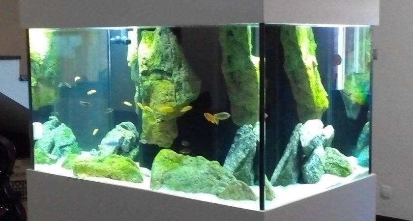 African Cichlids Aquarium Adn Design