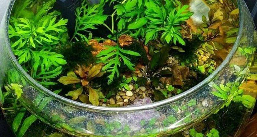 Another Nice Planted Bowl Apartment Pinterest