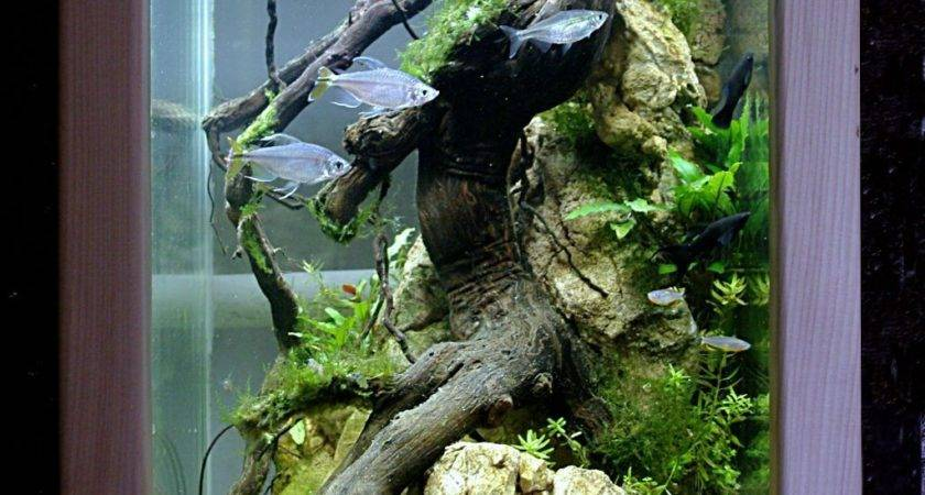 Aquarium Colone Design Aquascape Pinterest Aquariums