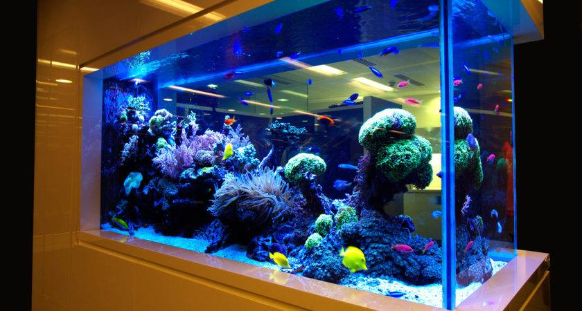 Aquariums Ponds Design Installation Best Delhi