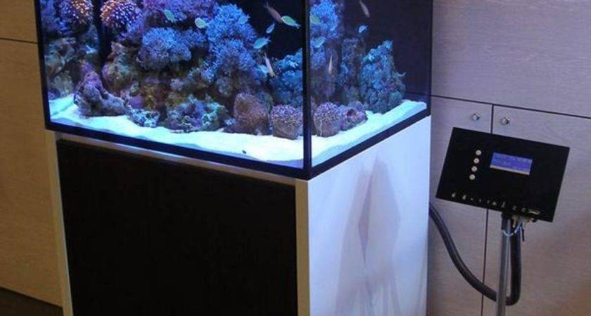 Archives Modern Aquarium Design Reef Aquaria