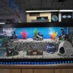 Awesome Fish Tanks Pinterest