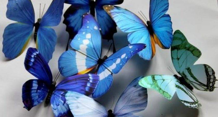 Colors Blue Butterfly Wedding Favor Home Decoration Ebay