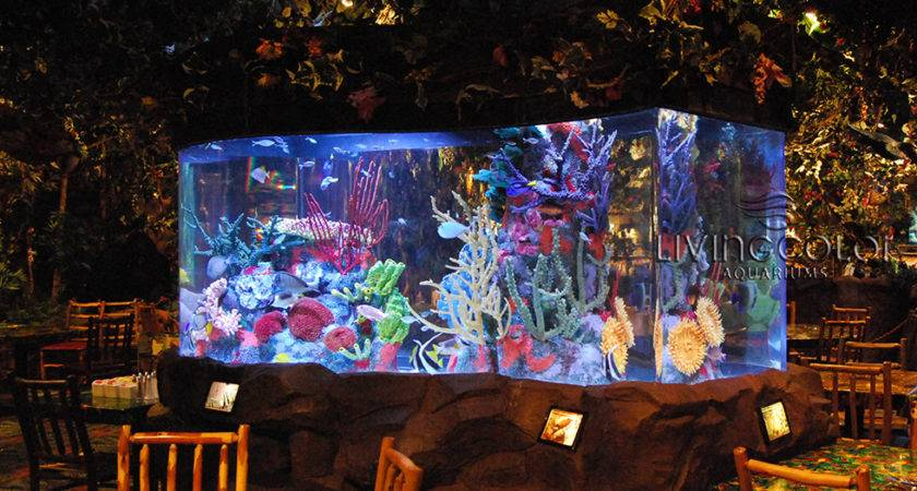 Commercial Aquariums Living Color