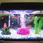 Cool Fish Tank Theme Ideas