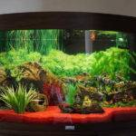 Decoration Create Aquarium Themes