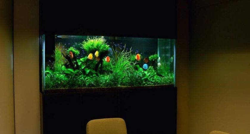 Decorations Awesome Fish Tank Decor Ideas