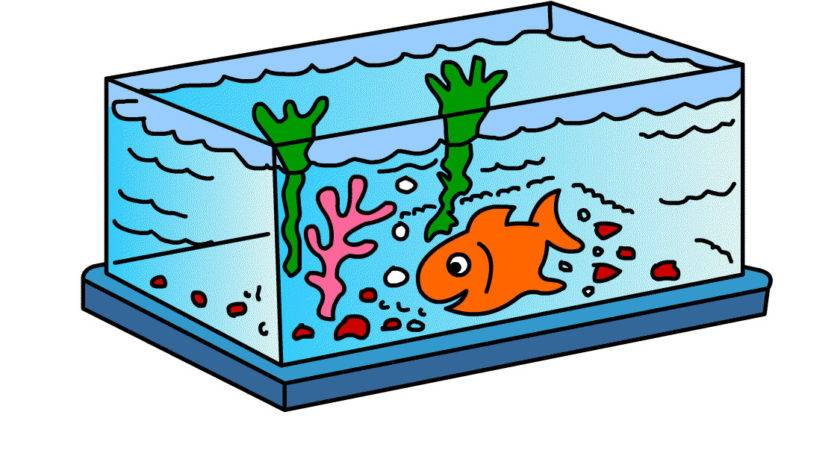 Draw Fishtank Kids Clipart Best