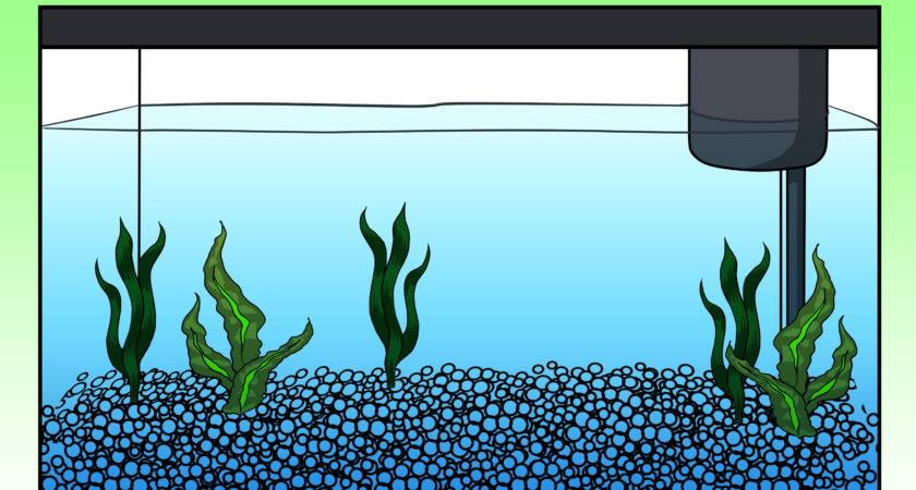 Fish Tank Drawing Clipart Best