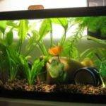 Good Fish Tank Decoration Ideas Accessories