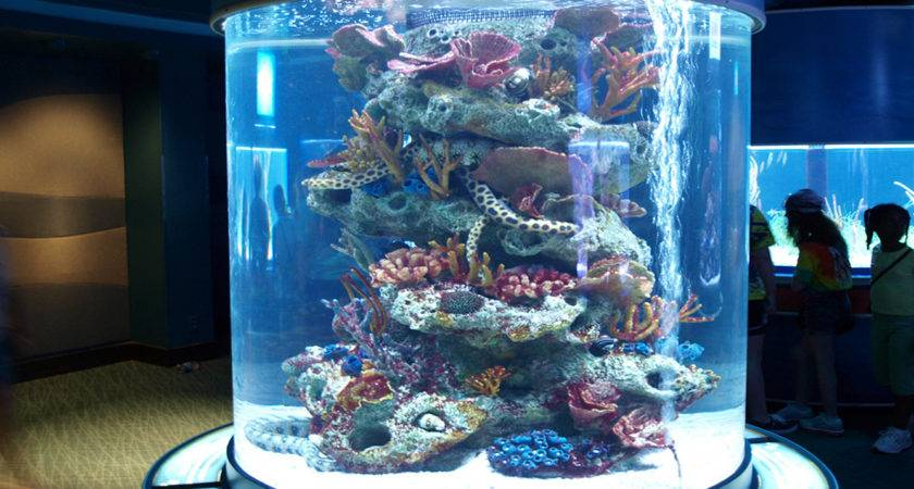 Living Color Aquariums Create Artificial Corals