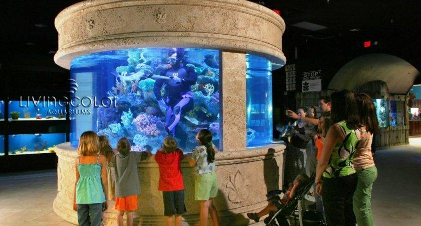 Living Colour Aquariums Aquarium Ideas