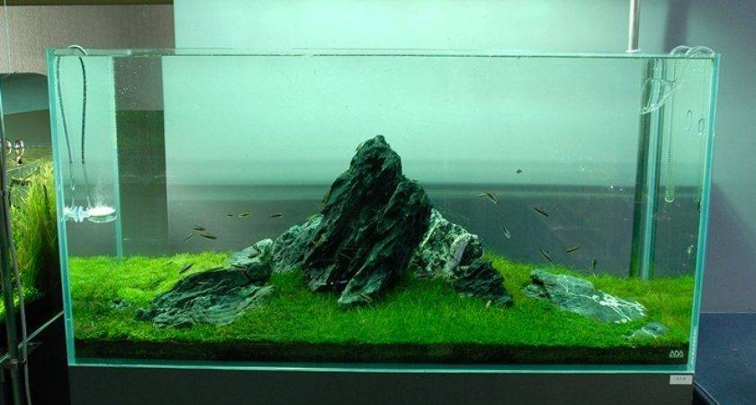 Nature Aquariums Aquascaping Inspiration