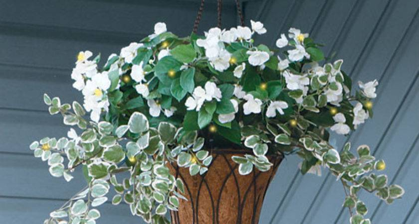 Pin Colleen Nelson Hanging Plants Pinterest