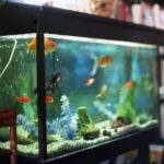 Sounds Fishy Reasons Incorporate Aquariums Into Your