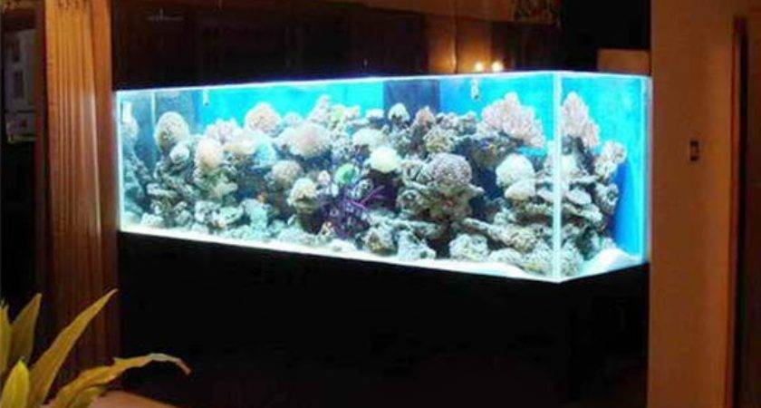 Top Aquarium Designs Your Interior Design
